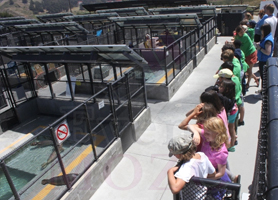 EventMozo Marine Mammal Center Science Sunday